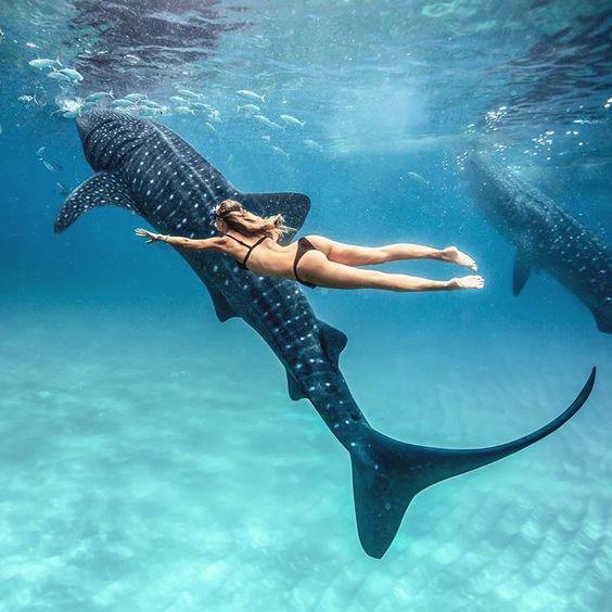 китовые акулы ослоб бесплатно