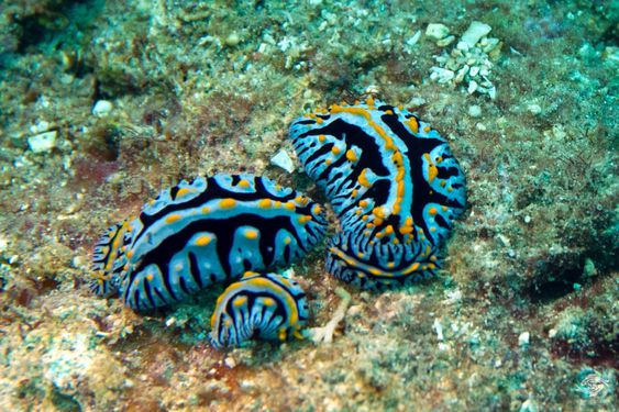 подводный мир филиппины